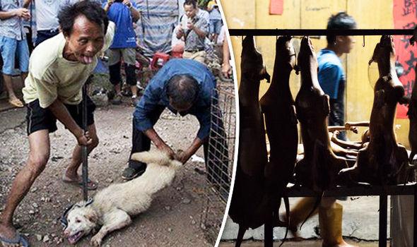 Cinesi macellano cani, Salvini interviene