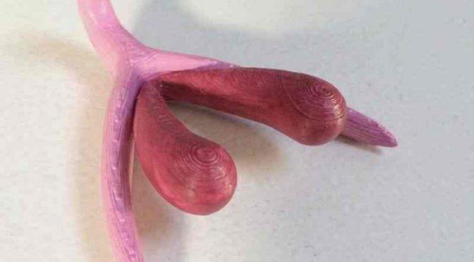 """""""Bamboline"""" clitoride per i bambini francesi nelle scuole"""