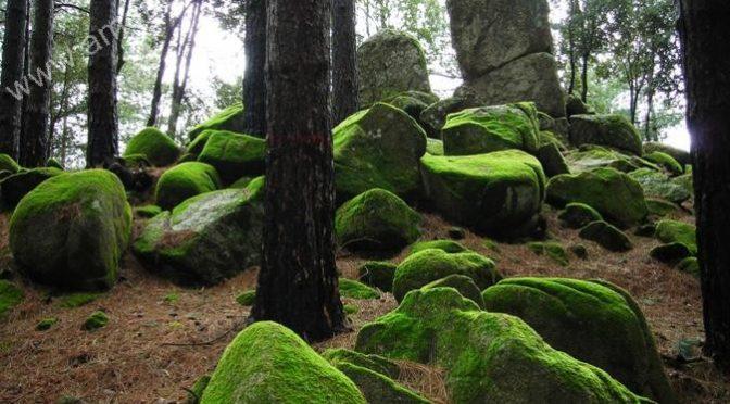 Il comune italiano con più forestali che abitanti: e una sorpresa antichissima