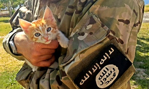 ISIS: Islamici ora se la prendono anche con i gattini