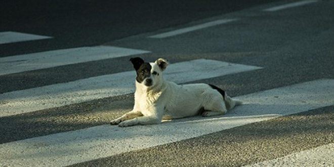 Morto nella casa in fiamme, vegliato dai suoi cani