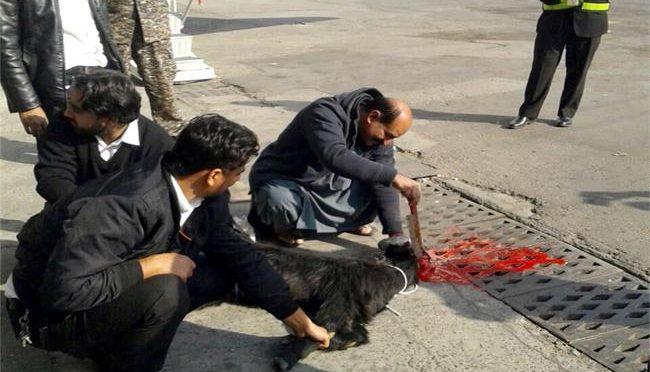 Compagnia aerea pakistana sacrifica capra a bordo pista per cacciare sfortuna – FOTO CHOC