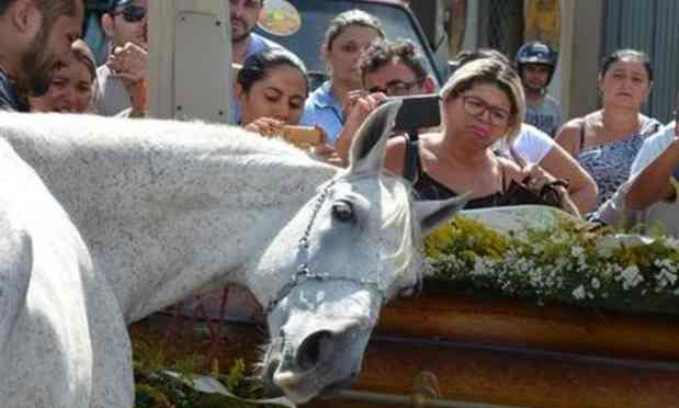 Anche i cavalli piangono: l'ultimo disperato saluto di Sereno – VIDEO