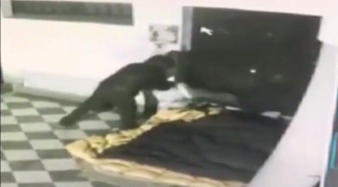 Palermo: così muoiono gli italiani, senzatetto bruciato vivo – VIDEO CHOC