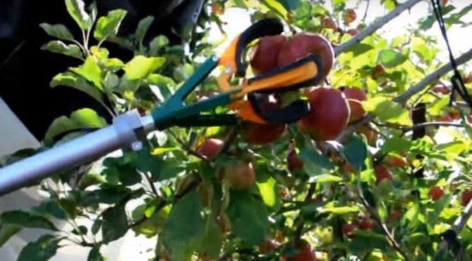 Addio immigrati, ora la frutta la raccolgono i Robots – VIDEO