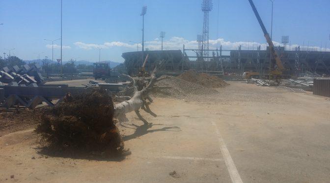 Alberi sradicati per fare spazio al nuovo stadio, appello per salvarli