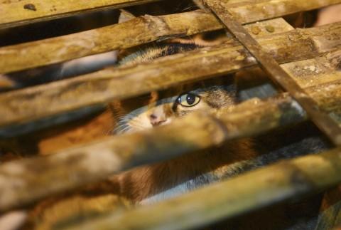 Boom di carne di gatto e cane in ristoranti asiatici