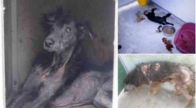 """Denuncia choc: """"Canile lager a Messina, morti centinaia di cani"""" – Foto"""