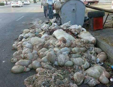 Carcasse animali a bordo strada dopo festa islamica del Sacrificio