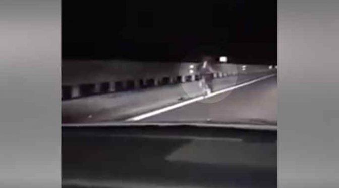 Migrante in bici contromano in tangenziale: di notte e a fari spenti – VIDEO