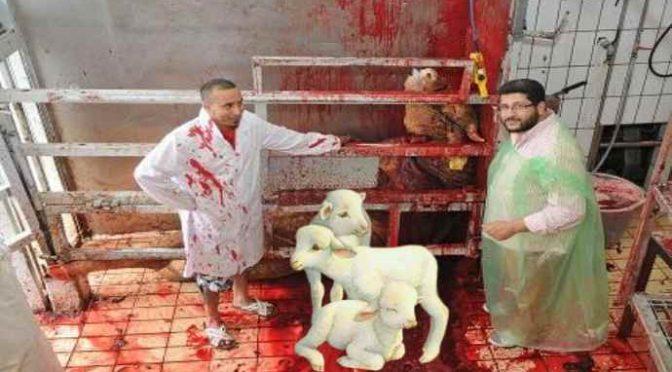 """Carabinieri salvano 400 agnelli dalla mattanza islamica: """"Li stavano per sgozzare"""""""
