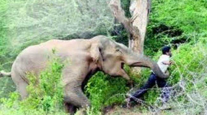 Musulmani invadono il loro territorio, elefanti li uccidono – VIDEO