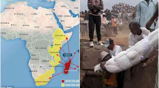 Peste sbarca in Africa: allarme in 10 Paesi africani