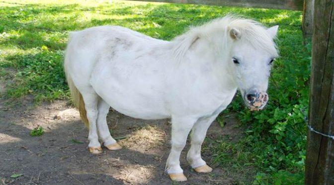 Profugo siriano stupra pony al parco, bambini scioccati
