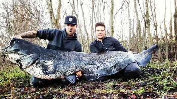 Due ragazzi catturano pesce siluro da 90 chili