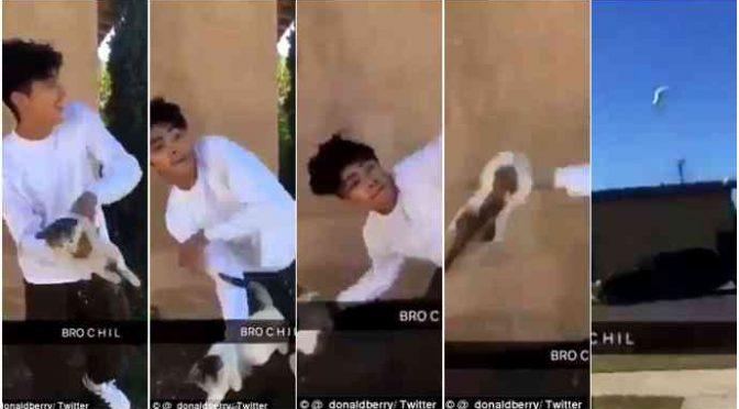 Meticcio lancia gattino per strada, fratture – VIDEO CHOC