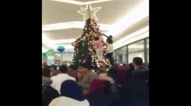 Musulmani offesi da albero di Natale in Comune, lo rimuovono