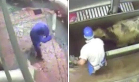 Tortura halal in macello islamico, video sciocca opinione pubblica inglese
