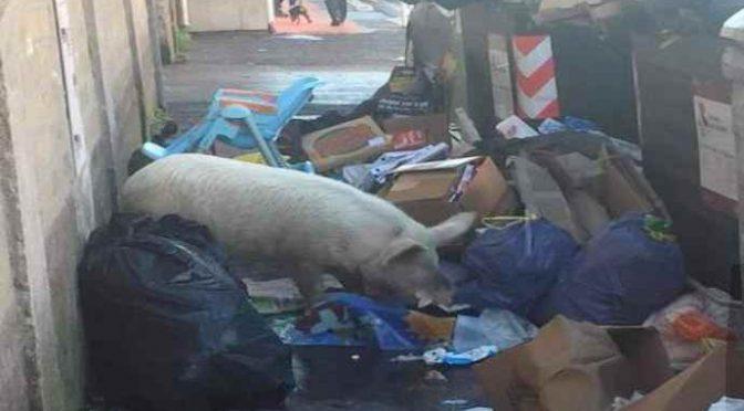 Rivolta sociale contro il maiale di Gene Gnocchi