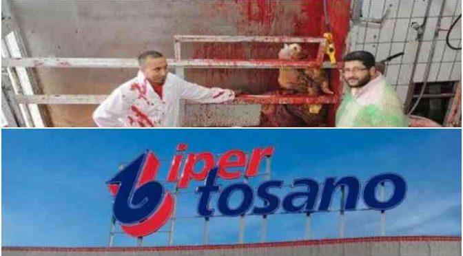 All'Iper Tosano reparto riservato a musulmani con carne di animali sgozzati vivi