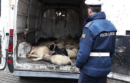 Agenti fermano islamici, e scoprono scena horror: poveri agnellini