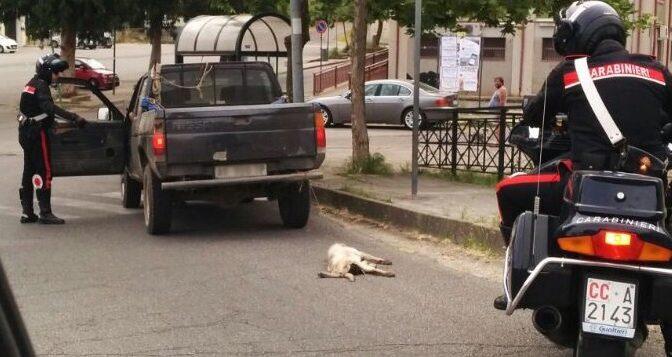 Trascina un cane con auto: solo denunciato