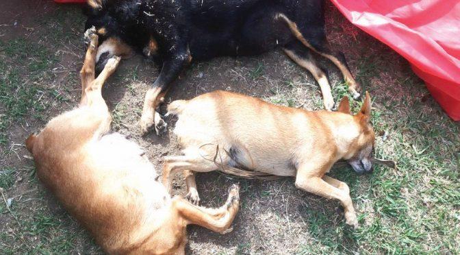 Sudafrica, la furia nera colpisce anche i cani: avvelenamenti