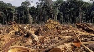 Ora il Vaticano devasta i boschi di Roma, taglio selvaggio