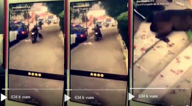 Cane trascinato legato a scooter in quartiere islamico – VIDEO