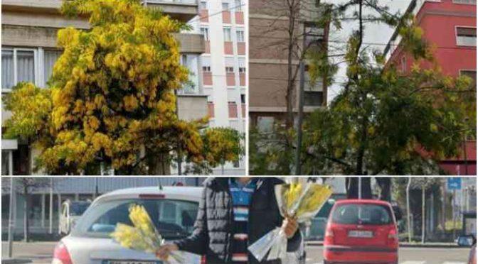8 Marzo: migranti razziano mimose e poi le rivendono per strada