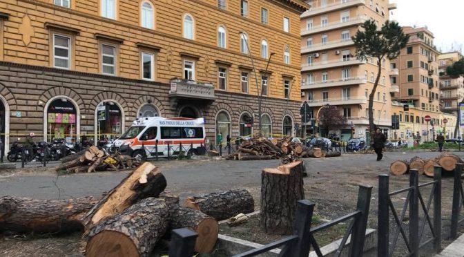 Strage di alberi a Roma in periodo nidificazione