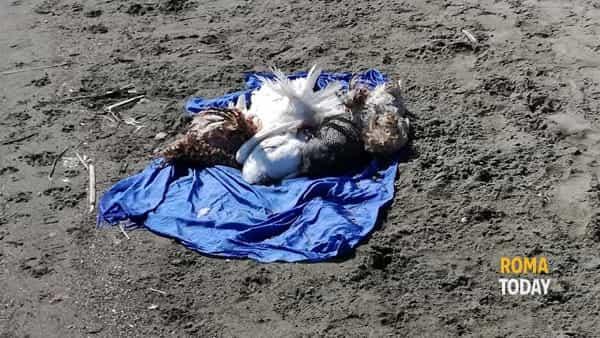 Riti voodoo sulla spiaggia di Ostia: animali sgozzati – FOTO