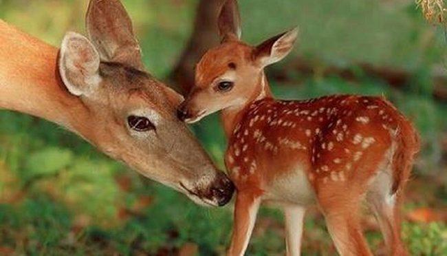 Bambi morto dopo ore d'agonia: per i tagli Pd non si trovava un veterinaio