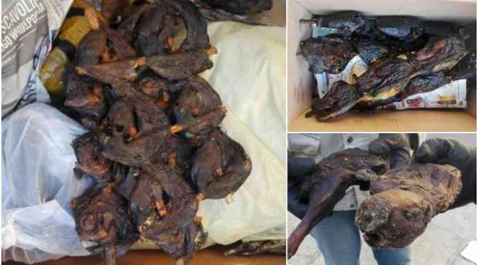 Spiedini di topo nei ristoranti nigeriani di Torino: sequestri