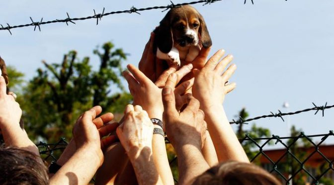 Ingiustizia è fatta: Green Hill, conferma condanne animalisti