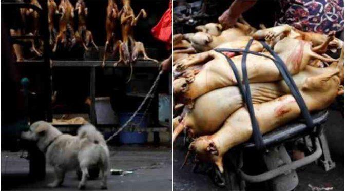 Cina, inizia il festival della carne di cane: 10mila cuccioli macellati