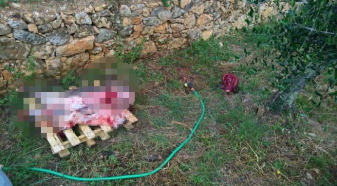 Immigrato uccide animale a mazzate e lo decapita per strada