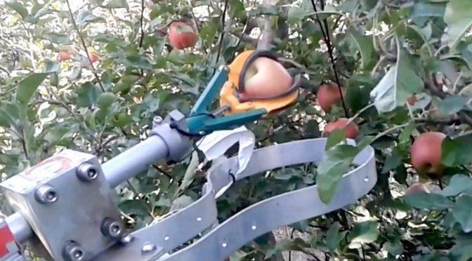 Saluzzo: città assediata da raccoglitori di frutta
