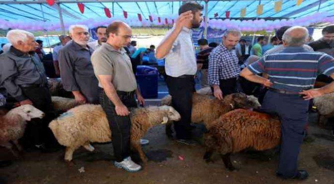 Salerno, festa sgozzamento rituale islamico allo stadio!
