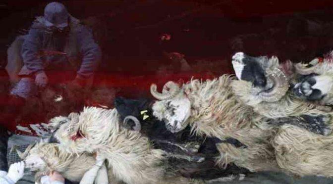 Festa del Sacrificio: sdegno per mattanza islamica in Italia