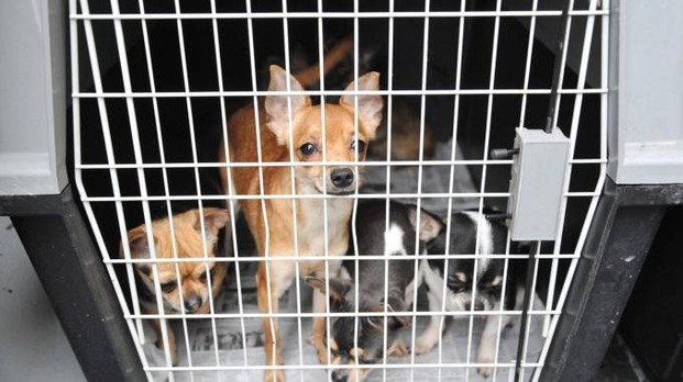 Blitz nel campo nomadi: ritrovato cane rapito 3 anni fa