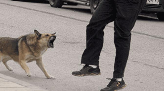 Cane picchiato si ribella e strappa pene a immigrato, lo vogliono abbattere