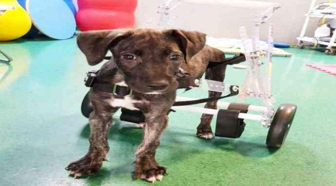 La cagnolina massacrata dai Rom ha bisogno di aiuto