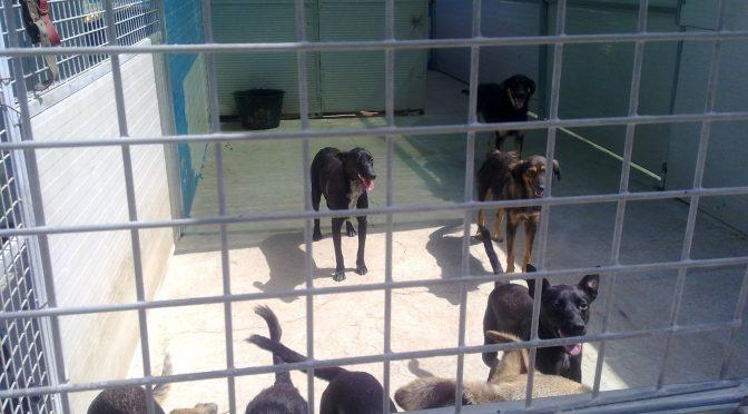 Animalisti denunciano maltrattamenti in canile Messina – FOTO