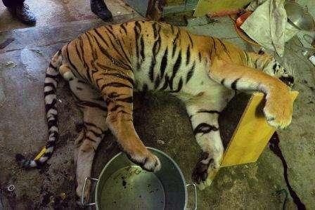 Scoperta orripilante: felini bolliti in pentola per la 'comunità cinese'