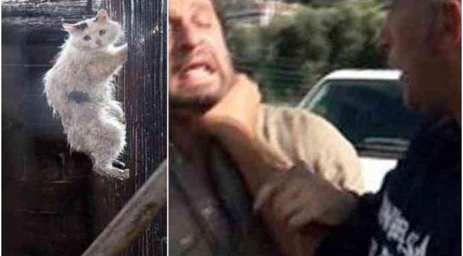 """Migranti sacrificano 70 gatti per riti: """"Non sapevo fosse reato"""" – VIDEO"""