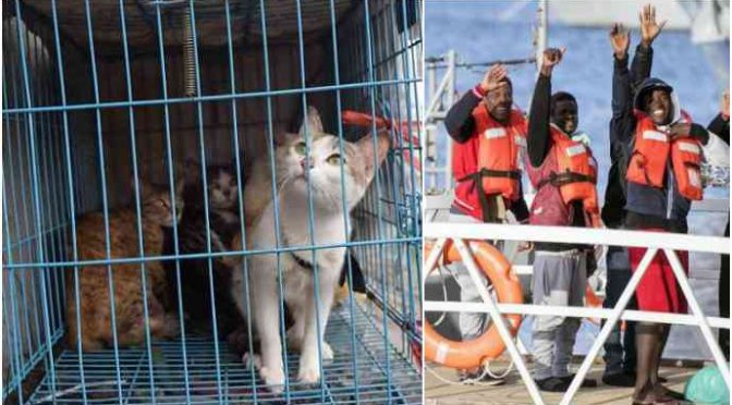 """Animalisti rivelano: """"immigrati nigeriani sacrificano gatti per riti voodoo"""""""