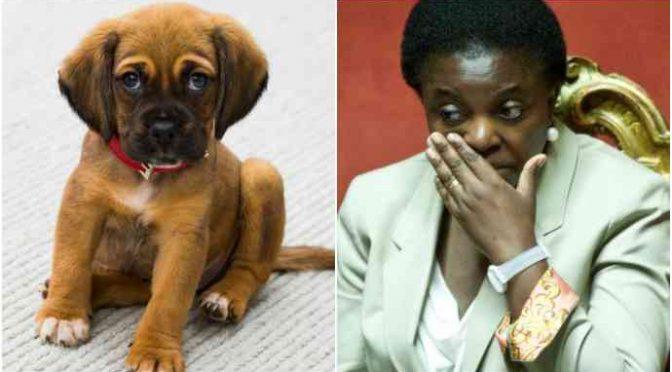 Salvini cerca casa ai cani abbandonati dai migranti