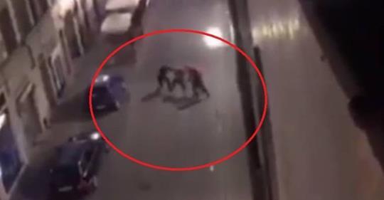 Buttafuori pestano nordafricano violento – VIDEO