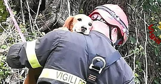 Cane cade in canalone, vigili del fuoco lo salvano